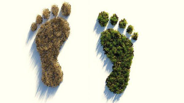 Fußabdrücke aus Pflanzen